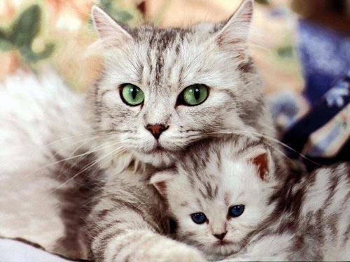 фотографии котят и кошек